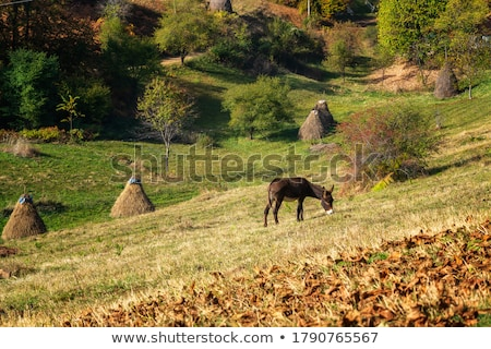 Meadow with haystack and Autumn foliage trees in the mountains  Stock photo © Arsgera