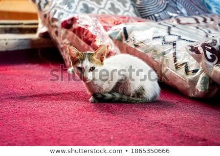 Cats Laying on Floor, Set of Kittens Fluffy Kitty Stock photo © robuart