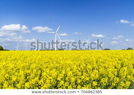 çiçekli rüzgâr geri doğa çiftlik yağ Stok fotoğraf © elxeneize
