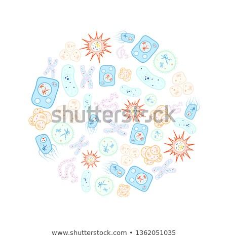 Zestaw jasne kolorowy biologii bakteria wirusa Zdjęcia stock © evgeny89