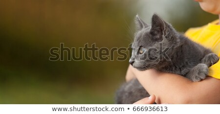 Child Holding a Kitten on White stock photo © tobkatrina