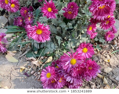 Stock photo: The autumn bouquet of wild and cultivated flowers