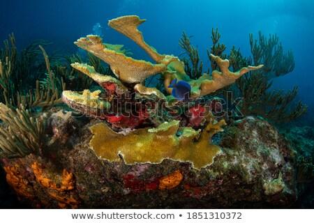 サンゴ · サンゴ礁 · 水 · 魚 · 海 · 美 - ストックフォト © Laracca
