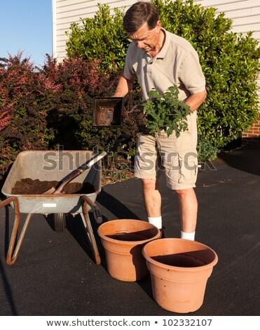 Senior man digging soil in wheelbarrow stock photo © backyardproductions