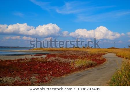 Derin mavi gökyüzü yeşil çim manzara deniz Stok fotoğraf © saje