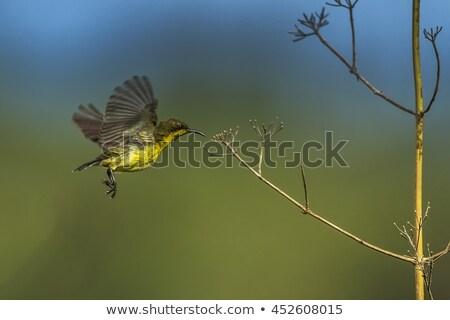 Kuş küçük küçük Tayland doğa ışık Stok fotoğraf © beemanja