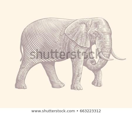 Klasik görmek fil yürüyüş aşağı yol Stok fotoğraf © timwege
