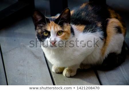 Foto stock: Jovem · gato · dois · isolado · gatinho · branco