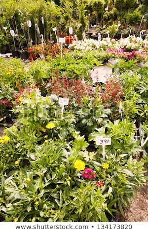 Plant Nursery at Mauerpark Flea Market Berlin Germany Stock photo © eldadcarin