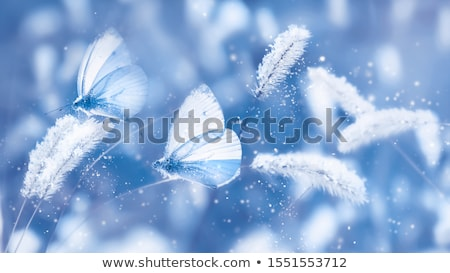 Foto d'archivio: Snow Butterfly