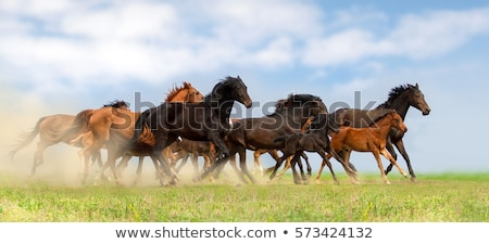 group of horses outside horse ranch in summer stock photo © juniart