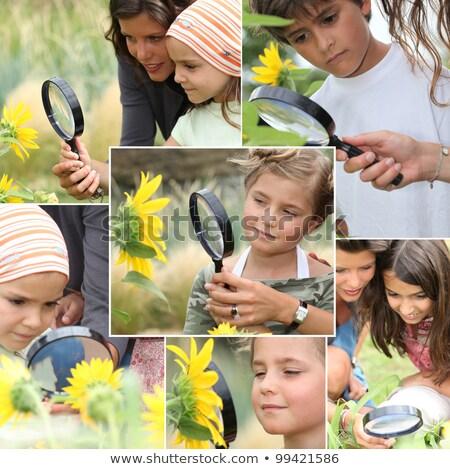 монтаж дети подсолнухи цветок трава Сток-фото © photography33