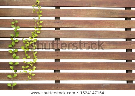 Foto stock: Rosa · naturales · pared · patrón · fondo · edificio