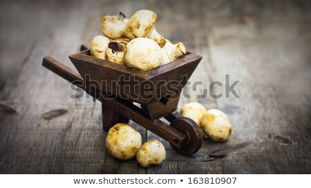 Fresh Muschrooms in a miniature wheelbarrow Stock photo © kbuntu