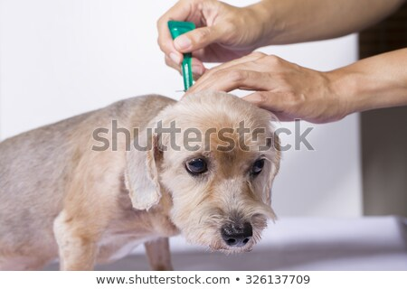 tick and flea prevention Stock photo © cynoclub