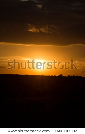красивой · закат · фото · квадратный · кадр · дерево - Сток-фото © ajn