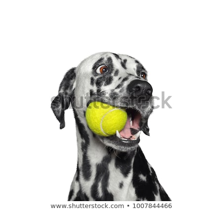 Perro pelota cachorro alegre juego primavera Foto stock © karelin721