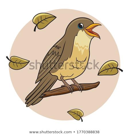 Ptaszyna piosenkarka funny szczęśliwy zielone zwierząt Zdjęcia stock © Artlover