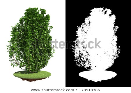 Green Bush with Detail Raster Mask. Stock photo © tashatuvango