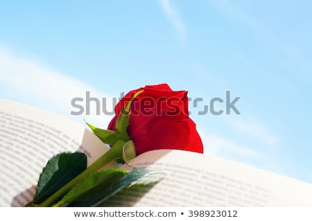 red rose and book, for Saint Georges Day in Catalonia, Spain Stock photo © nito
