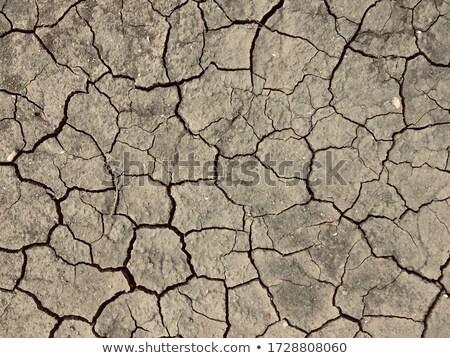 desert rough land dry crack erosion stock photo © mycola