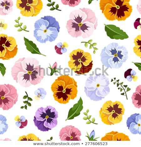 paars · witte · roze · natuur · frame · Rood - stockfoto © rabel