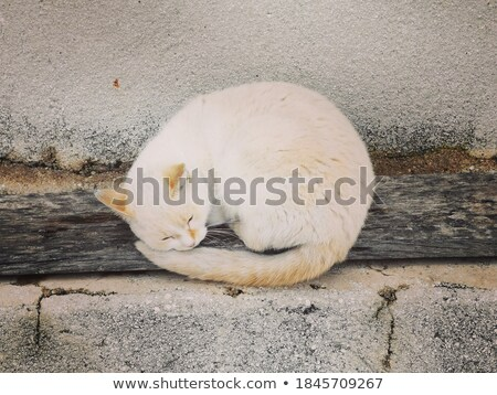 Cat sleeping on brown pebble Stock photo © punsayaporn