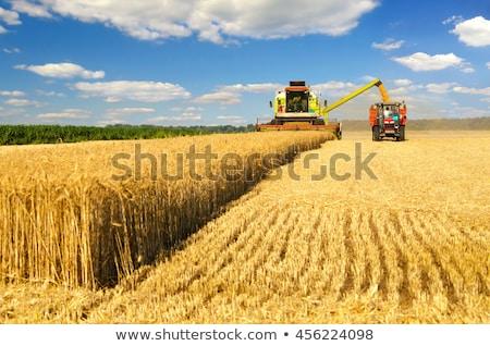 maquinaria · colheita · milho · outono · céu · tecnologia - foto stock © OleksandrO