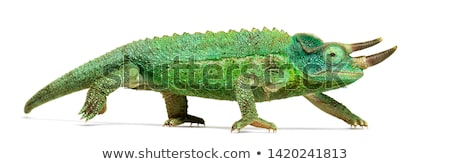 Jackson's chameleon Stock photo © rghenry