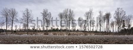 Arbre mort silhouette gris foncé nuageux ciel Photo stock © chrisga