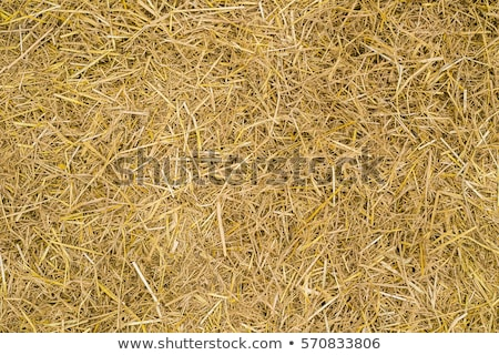 высушите сено текстуры растений Сток-фото © FOKA
