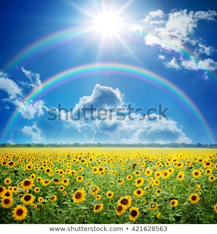 Foto stock: Verão · campo · céu · sol · arco-íris · grama