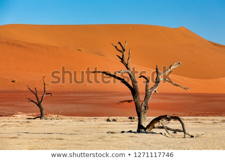 beautiful landscape of hidden vlei in namib desert panorama stock photo © artush