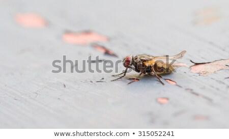 görüntü · küçük · böcek · saç · yeşil · kırmızı - stok fotoğraf © michaklootwijk