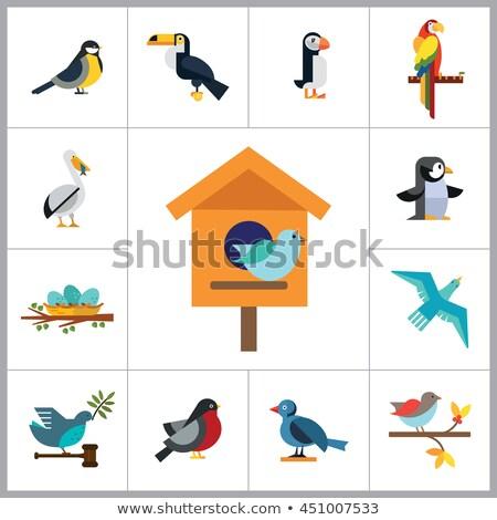 oiseau · séance · nature · jardin · faune - photo stock © jaffarali
