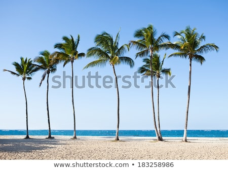 Stock photo: palmtrees in a row