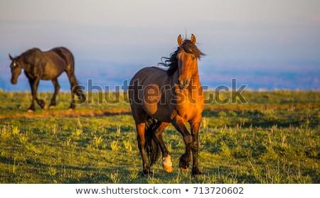 Lovak Wyoming nyáj hegy vidék fák Stock fotó © emattil