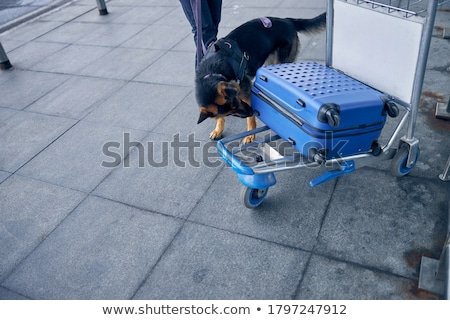 Sniffing dog at the airport Stock photo © Amaviael