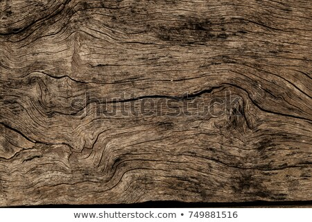 grunge old wooden texture Stock photo © clarusvisus