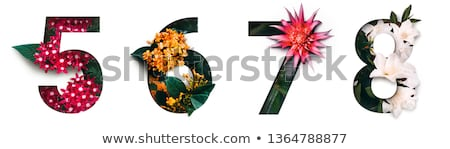 six colourful and blooming flowers stock photo © bluering