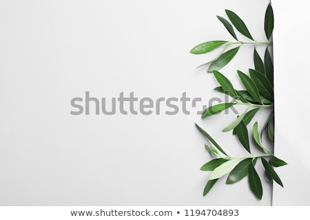 Olive Oil Decor  Stock photo © marinz