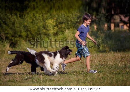 puppy newfoundland dog and teen Stock photo © cynoclub