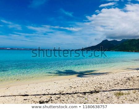 Foto d'archivio: Palme · spiaggia · isola · francese · polinesia · acqua
