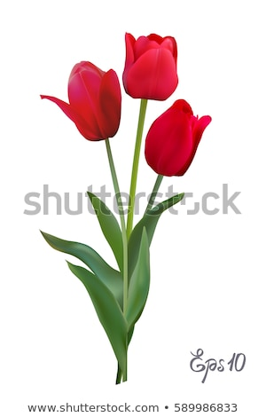 три · красный · тюльпаны · белый · лист · фон - Сток-фото © homydesign