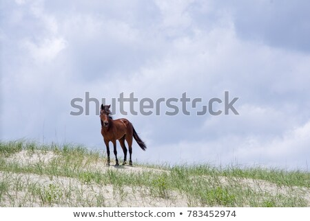 Spaans mustang natuur bomen park vrede Stockfoto © Photooiasson