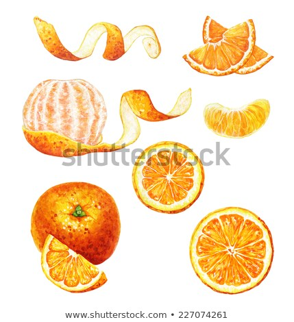 Stock photo: Watercolor illustration of peeled mandarin