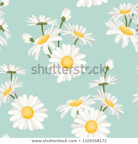 Daisy azul claro sin costura vector patrón Foto stock © yopixart