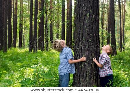 gülen · erkek · ağaç · tırmanma - stok fotoğraf © is2