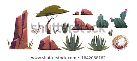 stones and vegetation set vector illustration stock photo © robuart