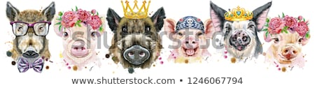border from pigs watercolor portraits of pigs and boars stock photo © natalia_1947